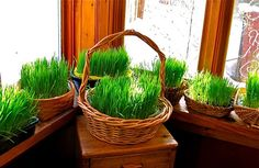 Wheat Grass baskets...ready for cutting and creating small worlds...or decorating to take home to celebrate Spring...