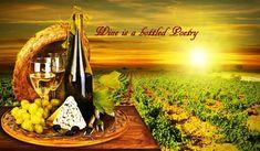 Winemag - Winemag.ro magazin de vinuri online.