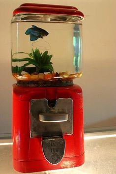 Gum ball machine aquarium