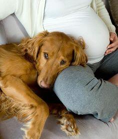 #cute #pregnant #woman #dog #baby #bump #maternity #pregnancy