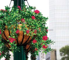 ferns and ivy in hanging baskets | Outdoor Artificial Flowers - Azalea Hanging Basket - Commercial Silk