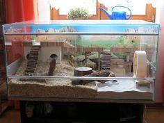 Bildergebnis für hamster terrarium