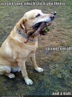 This is so my Bo! and when he is done every stick is the size of a tooth pick!