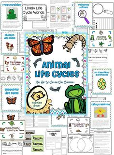 Falling Into First: Life Cycles Unit and Spring Animals