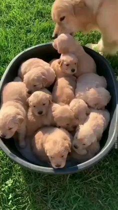 Cute Baby Puppies, Super Cute Puppies, Baby Animals Super Cute, Cute Wild Animals, Baby Animals Pictures, Cute Animal Photos, Cute Little Animals, Chubby Puppies, Cute Animals Puppies