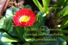 Ein fröhliches, liebevolles, sonniges und farbenfrohes Frühlingswochenende! http://www.farben-reich.com/
