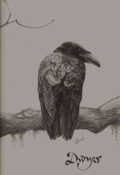 robert bateman pencil - Google Search Awesome Art, Cool Art, Fox Drawing, Wildlife Art, Pencil Art, Crow, Charcoal, Pastel, Ink