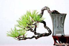 How Herb Back Garden Kits Can Get Your New Passion Started Off Instantly Bonsai Mini Bonsai, Indoor Bonsai, Ikebana, Bonsai Art, Bonsai Plants, Garden Terrarium, Bonsai Garden, Art Floral, Bonsai Styles