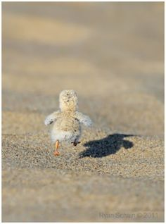 Sometimes the best plan is to RUN AWAY AS FAST AS YOU CAN. #cute That is the cutest thing I have ever seen!!!!!