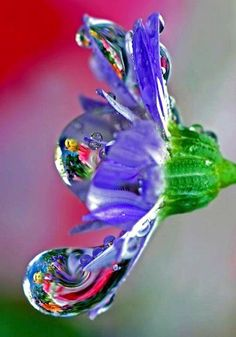 Flower with water drops. Celebrating Life on Facebook at www.facebook.com/CelebratingLifeNow