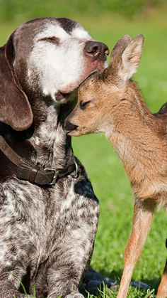 Old dog, tiny fawn
