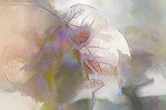O'Connor Rose Abstract by Terry Davis #rose #abstract #flower