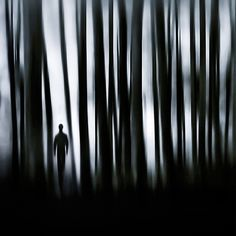 176 Haunted Forest On Pinterest Dark Forest Forests And Mists