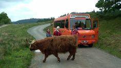 Discover Scotland with The Hairy Coo. Small group tours where you will experience the best of Scotland with one of our knowledgeable and entertaining guides Scottish Highlands Tour, Scottish Tours, Best Of Scotland, Scotland Tours, Edinburg Scotland, Great Britan, Edinburgh Tours, Wallace Monument, Travel Tours