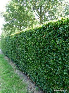 Groene beukenhaag Backyard Gazebo, Backyard Privacy, Backyard Playground, Privacy Fence Landscaping, Landscape Design, Garden Design, Minimal House Design, Garden Shower, Patio Layout