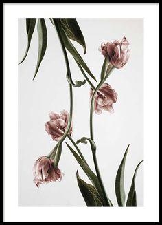 Pink Tulipe no2 Poster in der Gruppe Neuheiten bei Desenio AB (2120)