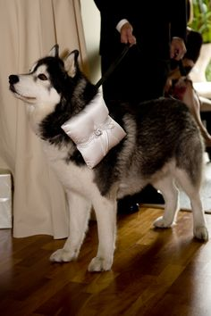 Another one of our ring bearers ... wait and see - HOT trend for 2012 - Shot at Weddings InStyle Ottawa