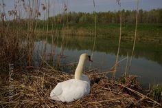 Zdieľané s Wild Bird Wednesday 41 Wild Birds, Relax, Animals, Animales, Animaux, Animal, Animais