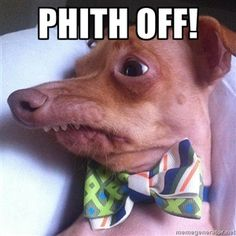"""Tuna, the """"Phteven"""" dog- this jupht happened to catch my eye and it phtruck my funny bone pho hard that I almopht peed myphelf XD"""