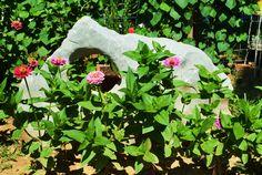 My Hag stone with Zinnias Hag Stones, Zinnias, Garden, Flowers, Plants, Garten, Lawn And Garden, Gardens, Plant
