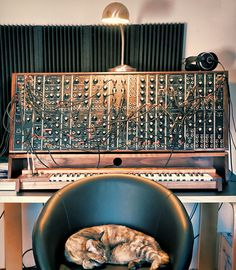 #Cat vs. Modular Synth  Like,Repin,Share, Thanks!