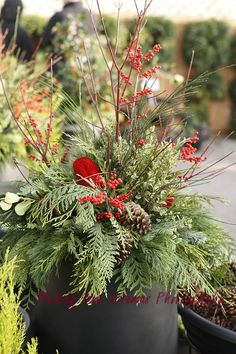 Muddy Boot Dreams: Christmas Planters a bright welcome at your door. Christmas Urns, Christmas Planters, Christmas Arrangements, Outdoor Christmas Decorations, All Things Christmas, Winter Christmas, Christmas Holidays, Christmas Wreaths, Christmas Crafts