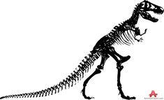 Dinosaur Skeleton Clipart Black And White - Clip Art Library Tyrannosaurus Rex Skeleton, Dinosaur Skeleton, Skeleton Drawings, Skeleton Tattoos, Camping Clipart, Clip Art Library, Silhouette Images, Clipart Black And White, White Picture