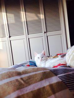 ねこごちよりhttp://necogochi.exblog.jp