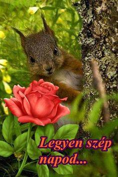 Beautiful Day, Animals, Roses, Animales, Animaux, Animal, Animais