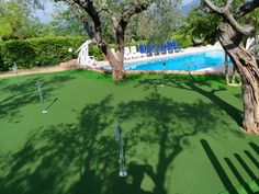 Artificial Turf, Grass, Golf Courses, Astroturf, Grasses, Herb