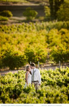 Photo in the vineyard | Photo: Wrensch Lombard