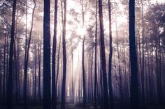 Wooden Dreams by trynidada on 500px