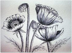 PEN & INK POPPIES        Sometimes I have to go back to my ''first love'' which is Pen & Ink    Mostly BALLPOINT pen...:) with a touch of black Pigma ink pen and white Gel.