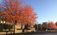Autumn 🍂 Tri Cities, Autumn, City, Fall