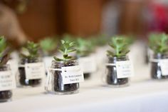"""DIY Succulent Favors Easy, eco-friendly favors your guests will LOVE! These DIY succulent favors make beautiful gifts for guests, double as a place card, and are easy to make! Succulent Wedding Favors, Wedding Favours, Party Favors, Diy Party, Party Gifts, Party Ideas, Diy Ideas, Food Ideas, Terrarium Wedding"