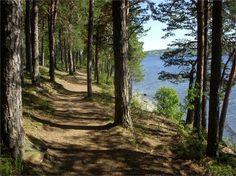 Skogsstig utmed sjön
