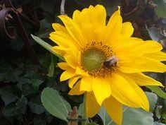 Bumblebee, 2014