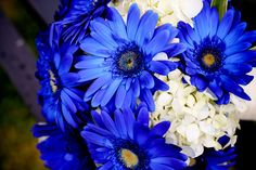 blue daisy bouquet...love this, or the blue gerber daisy's with white roses