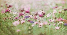 Meadow flower Art Print by Anne Seltmann | Society6