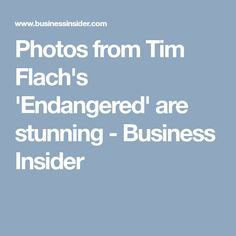 Photos from Tim Flach's 'Endangered' are stunning - Business Insider