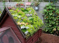 Green roofed chicken coop. How urban farmer chic!