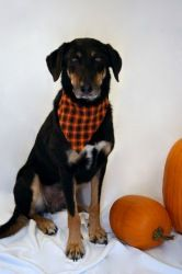 Tipsy is part shepherd, but purebred sweetheart! Come meet her at Happily Ever After in Northeast WI!