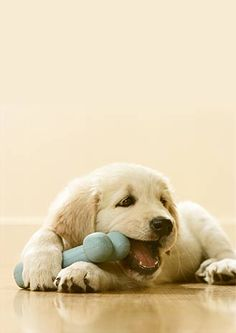 Puppy and toy