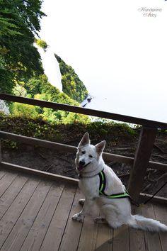 Tolle Urlaubstipps für den Urlaub mit Hund auf Rügen.