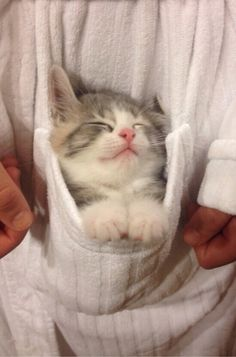 She Likes Snuggling In My Robe | Cutest Paw