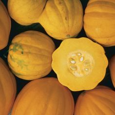 Winter Squash for Tight Quarters. 'Table Gold' is the author's favorite bush acorn. It's sweeter and more flavorful than common vining green acorns. Sweet Dumpling Squash, Sweet Dumplings, Squash Plant, Squash Bugs, Fine Gardening, Vegetable Gardening, Urban Gardening, Container Gardening, Organic Gardening