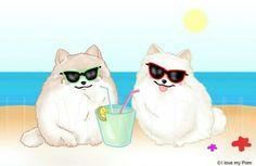 Pom sunglasses
