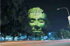 Cambodge arbres - Les projections de Clément Briend