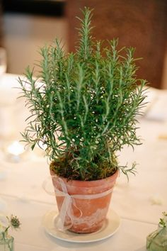 Like the idea of doing a separate herb for each table...Simple pot, with a lavender ribbon around each one