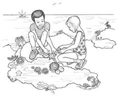 Life in the Intertidal Zone printable ~ Ocean Habitat